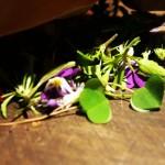 Foraged herbs, foraging with Sami Tallberg, Helsinki