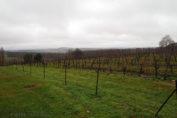 Vineyard, Château Thénac, Bergerac