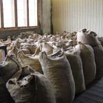 Nutmeg ready to ship, Gouyave nutmeg factory, Grenada